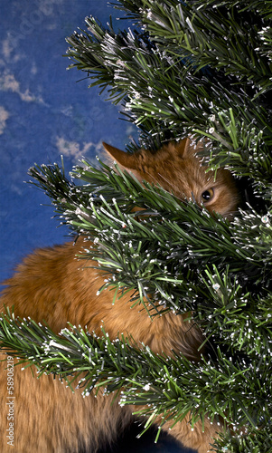 Ginger funny cat is hiding behind Christmas tree