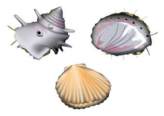 魚介(活きている姿) 鮑、サザエ、帆立