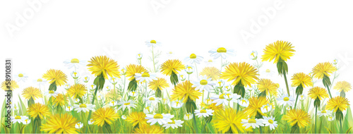 Vector spring flowers,  yellow chamomiles and dandeliones.