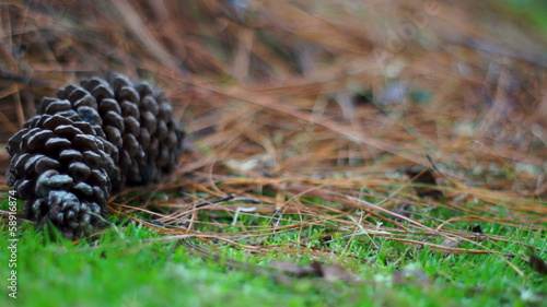 Pine Cone in the Grass Dolly