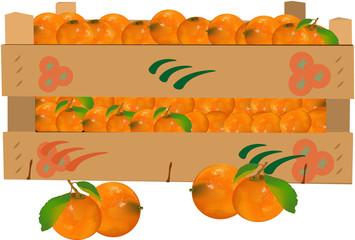 cassetta di frutta