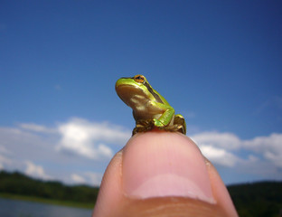 frog on a thumb