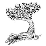 Sketched bonsai tree