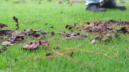 Raking Lawn Closeup Dolly