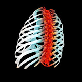 3d render illustration of painful back