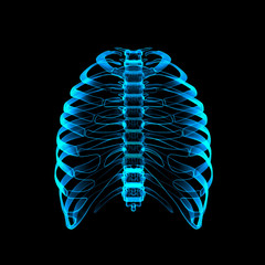 Human skeleton by X-rays - front