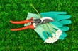 Secateurs with flower on green grass background