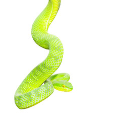 Ekiiwhagahmg snakes (snakes green) on white background.