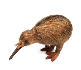 kiwi bird toy isolated on the white background