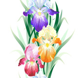 Vector seamless pattern with Iris flowers