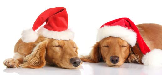 Sleepy Santa Christmas dogs