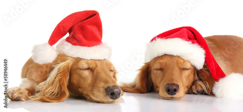 Sleepy Santa Christmas dogs