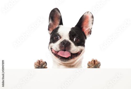 Aluminium Franse bulldog Französische Bulldogge