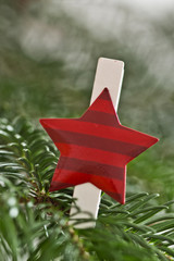 Star decoration on spruce tree