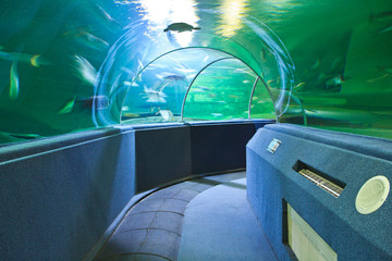 Aquarium Underwater Tunnel