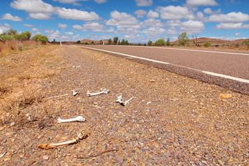 Road kill, Australia