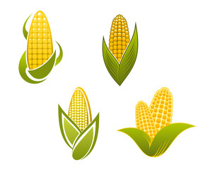Yellow corn icons and symbols