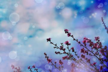 Flower backgrond , spring bloom