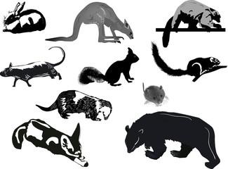 ten animal sketches on white background