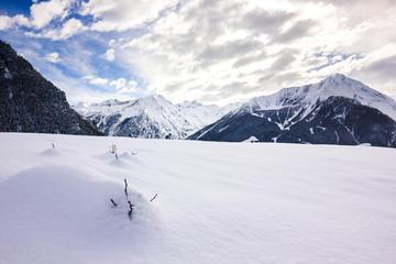 Rami che escono dalla neve con panorama
