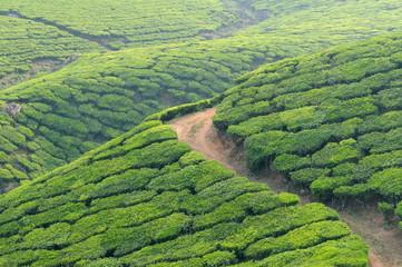 India, Kerala