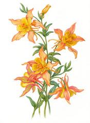 Изящные цветы, акварель.