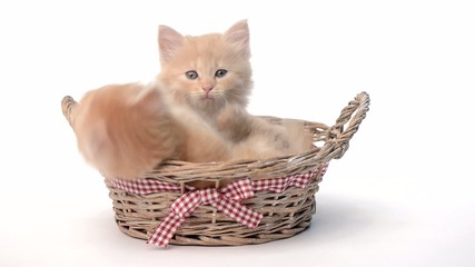 Two playful kittens in the basket