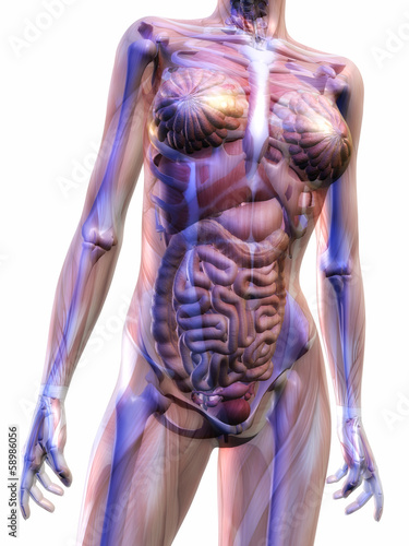 canvas print picture Human Anatomy