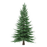 Tree isolated. Picea fir-tree