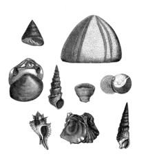 9 Prehistoric Fossils
