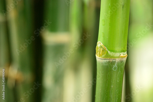 Bamboo background © PathomP