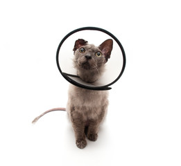 Cat in elizabethan collar looking up