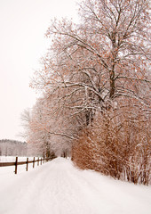 trees and wooden fence in winter