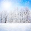Winter scene - 58994698