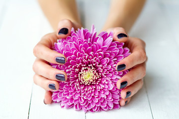 Hands with stylish dark manicure and pink flower