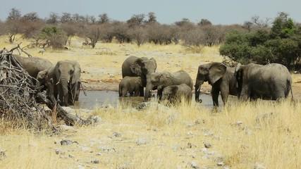 Elephants on water-hole,Namibia,Etosha NP