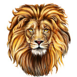 lion head in front