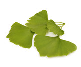 Green  autumn leaves of Ginkgo biloba on white background.