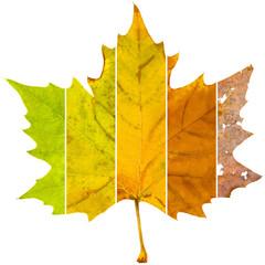 seasons - aging leaf