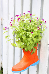 Funny flower decoration set in old rubber boot with wood wall in