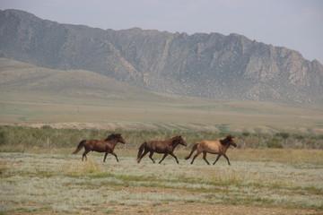 Монгольская тройка