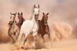Zdjęcia na płótnie, fototapety, obrazy : Horses in dust