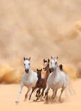 Horses in dust - 59010675