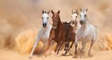 Horses in dust - 59010678