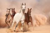 Horses in dust - 59010682