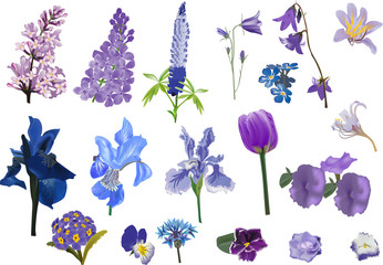 set of isolated violet flowers collection