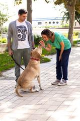 Giovane coppia che addestra il loro cane Labrador