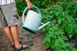 retired person watering her plants in a garden
