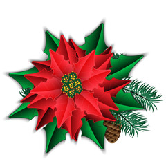 Poinsettia and fir branch with cone isolated on white.