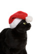 Black Cat Santa - cute christmas cat on white background